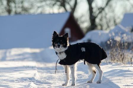 vintervallning 6