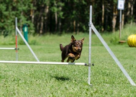 agility 21